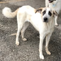 Lady has been Adopted